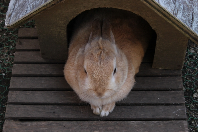 ウサギ小屋おじさん